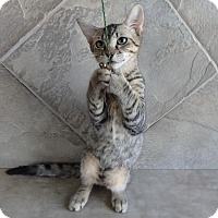 Adopt A Pet :: Pepsi - Seguin, TX