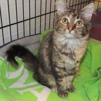 Adopt A Pet :: Peaches - Westville, IN