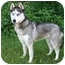 Photo 3 - Siberian Husky Mix Dog for adoption in Ladysmith, Wisconsin - D0217