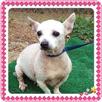 Chihuahua Mix Dog for adoption in Marietta, Georgia - QUEENIE (R)