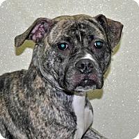 Adopt A Pet :: Priscilla - Port Washington, NY
