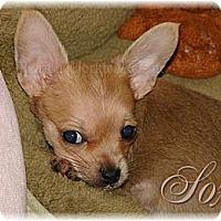 Adopt A Pet :: Sox - Palm City, FL