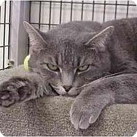Adopt A Pet :: Roz - Deerfield Beach, FL