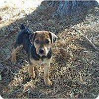 Adopt A Pet :: Darla (pending adoption) - Adamsville, TN