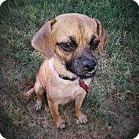 Adopt A Pet :: Wendy - Austin, TX