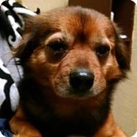 Adopt A Pet :: Red - Rockaway, NJ