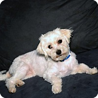 Adopt A Pet :: Riley - Blairstown, NJ