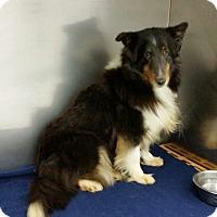 Adopt A Pet :: Mya - COLUMBUS, OH