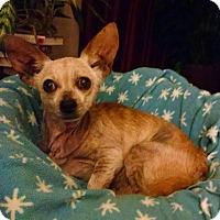 Adopt A Pet :: Nuggie - Richmond, VA