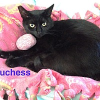 Adopt A Pet :: DUCHESS - Hamilton, NJ