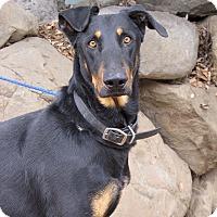 Adopt A Pet :: Goofy - Fillmore, CA