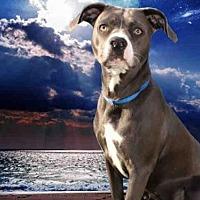 Adopt A Pet :: AERIAL - Fairfield, CA