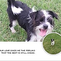 Adopt A Pet :: FeeFee - San Antonio, TX