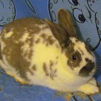 Adopt A Pet :: Roxie - Alexandria, VA