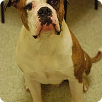 Adopt A Pet :: Bentley - Westminster, MD