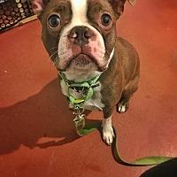Adopt A Pet :: Kemo - San Francisco, CA