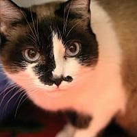 Adopt A Pet :: Wampa Kimba - Camden, DE