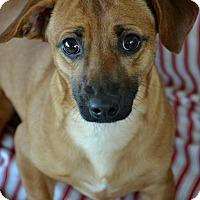 Adopt A Pet :: Bubba - Okeechobee, FL