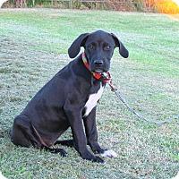 Adopt A Pet :: MARCIE - Bedminster, NJ