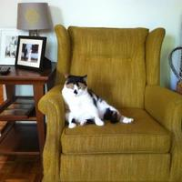 Adopt A Pet :: Calliope - Fairfax Station, VA