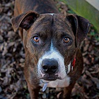 Adopt A Pet :: Iris ~ Sponsored ~ Reduced Adoption Fee~ - Youngsville, NC