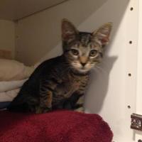 Adopt A Pet :: Cindy - Randleman, NC