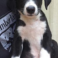 Adopt A Pet :: Anthony - SOUTHINGTON, CT