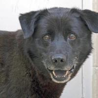 Adopt A Pet :: Slade - Noblesville, IN