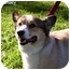 Photo 1 - Pembroke Welsh Corgi Dog for adoption in Houston, Texas - Tansey