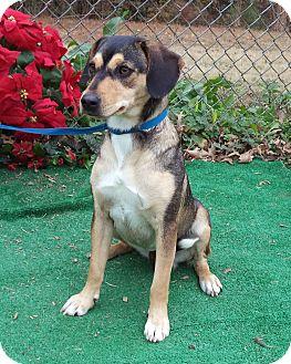 Australian Terrier Mix Dog for adoption in Marietta, Georgia - BANGLES