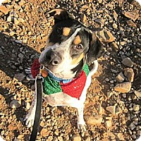 Adopt A Pet :: Lucky - Scottsdale, AZ