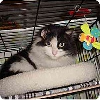 Adopt A Pet :: Majestic Winston - cincinnati, OH