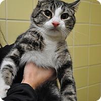 Adopt A Pet :: Cody - Rockaway, NJ