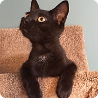 Adopt A Pet :: Frosty - Simpsonville, SC