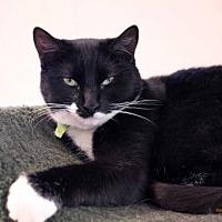 Adopt A Pet :: Snugs - Paris, ME