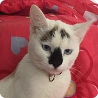 Adopt A Pet :: ABBY - Santa Monica, CA