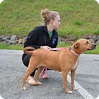 Adopt A Pet :: Felicia - East Randolph, VT