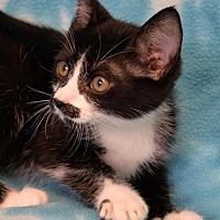 Adopt A Pet :: Rhonda - Eureka, CA