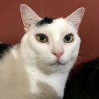 Adopt A Pet :: JOHNNY (BONDED TO BABY) - THORNHILL, ON