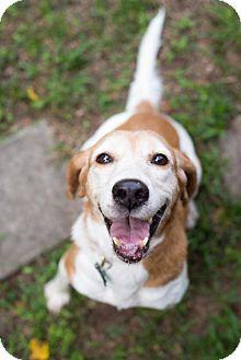 Hound (Unknown Type) Mix Dog for adoption in Elkton, Florida - Annie