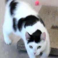 Adopt A Pet :: Kera - Waupaca, WI