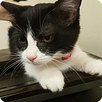Adopt A Pet :: Pinky G - Trevose, PA