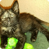 Adopt A Pet :: Querida - North Highlands, CA