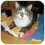 Photo 3 - Domestic Mediumhair Cat for adoption in Toronto, Ontario - Snuggles