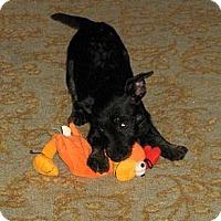 Adopt A Pet :: Kid Tested - Mom Approved!!! - Pulaski, TN