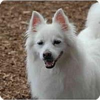 Adopt A Pet :: Finnegan - Ft. Myers, FL