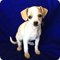 Adopt A Pet :: Megan - Tustin, CA