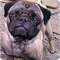 Adopt A Pet :: Bob - dewey, AZ