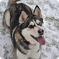 Adopt A Pet :: Kimba - East Smithfield, PA