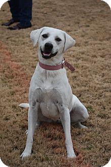 Labrador Retriever Mix Dog for adoption in Eden Prairie, Minnesota - Maggie